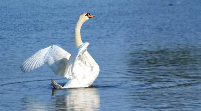 Jezioro Paproceńskie – miejsce relaksu w Tychach